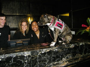 The Hard Rock Hotel in Chicago treated Ruby royally....Not bad for a little dog left to die in an abandoned house...