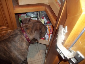 Back home, Blue raids the cupboards for his favorite but rare treat...... Marshmallos!