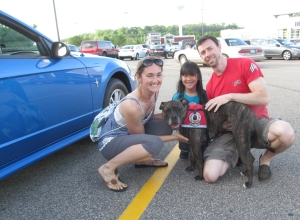 The day we brought the car to Rochester for Wallace, Ruby wasn't feeling well. (bad disc) But Sugar was a perfect stand-in! Some day she will carry the torch for Ruby at book signing events as poor Ruby continues to have problems with her back and hind legs.